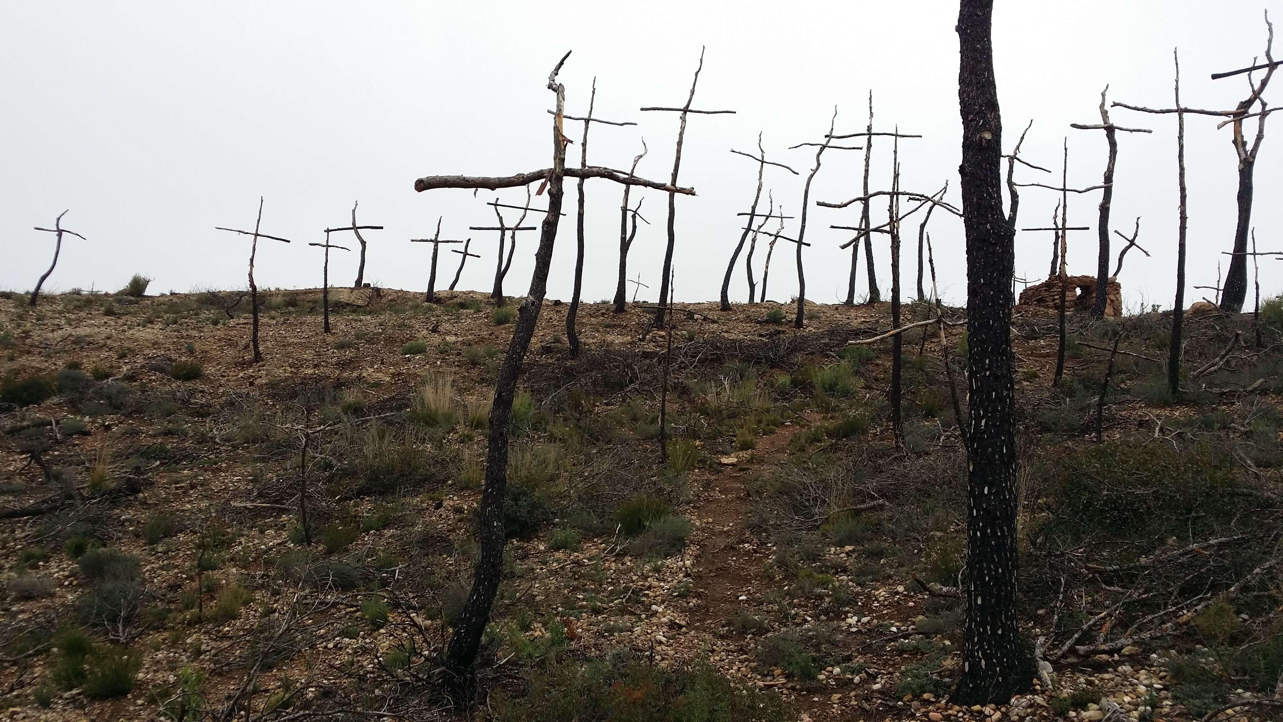 bosque-quemado